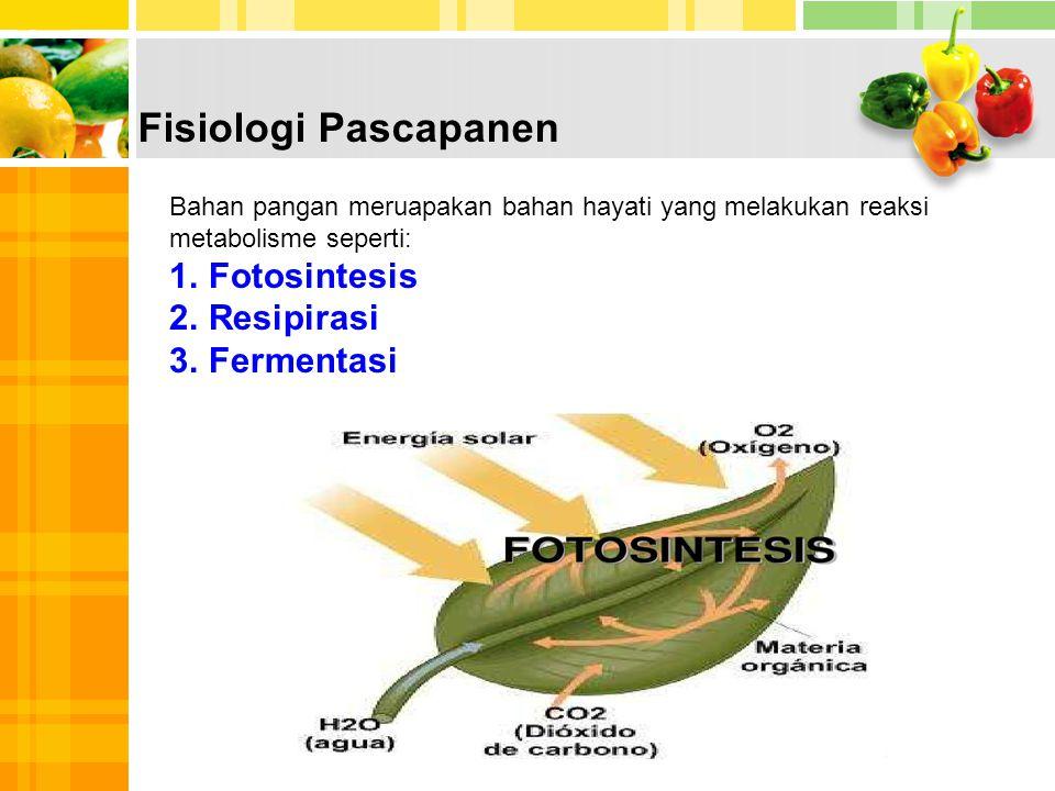 Fisiologi Pascapanen Fotosintesis Resipirasi Fermentasi