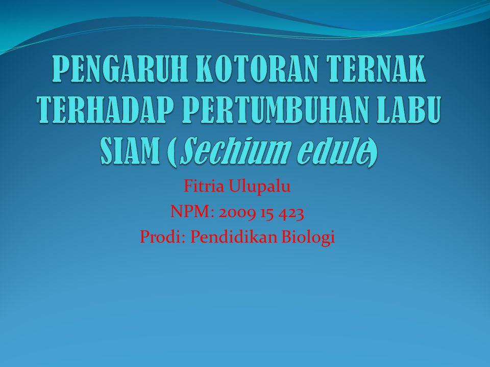 PENGARUH KOTORAN TERNAK TERHADAP PERTUMBUHAN LABU SIAM (Sechium edule)