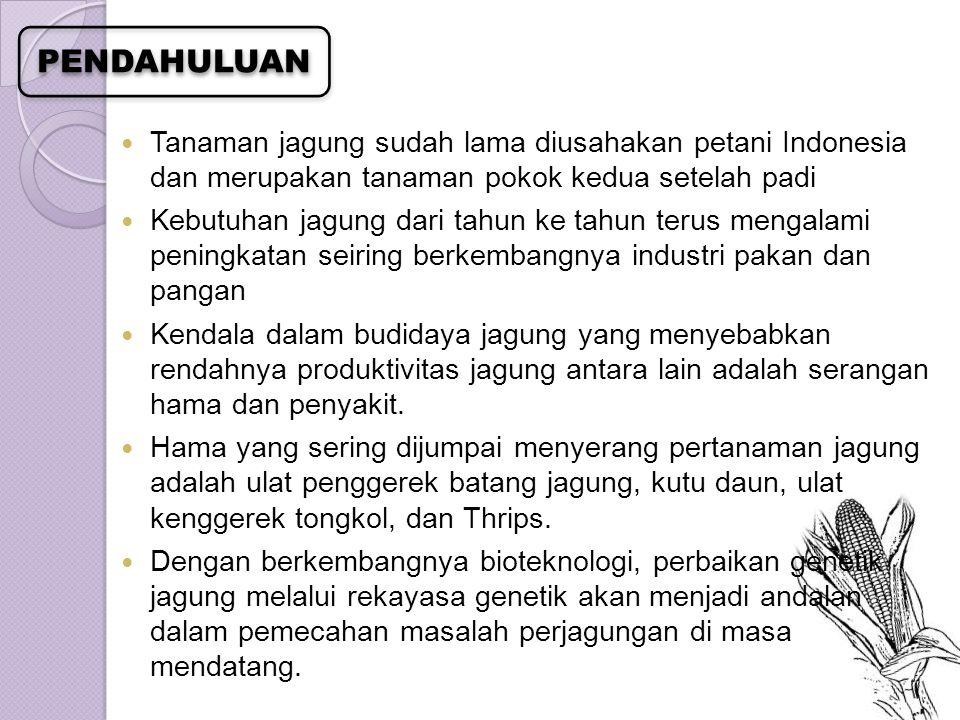 PENDAHULUAN Tanaman jagung sudah lama diusahakan petani Indonesia dan merupakan tanaman pokok kedua setelah padi.