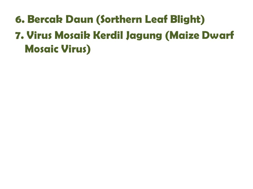 6. Bercak Daun (Sorthern Leaf Blight) 7