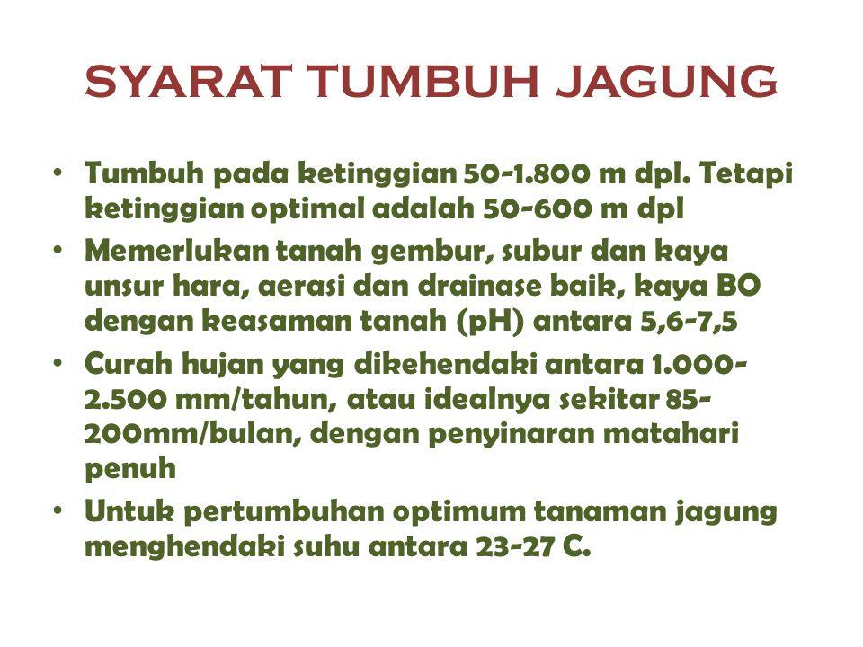 SYARAT TUMBUH JAGUNG Tumbuh pada ketinggian 50-1.800 m dpl. Tetapi ketinggian optimal adalah 50-600 m dpl.