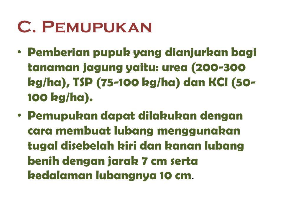 C. Pemupukan Pemberian pupuk yang dianjurkan bagi tanaman jagung yaitu: urea (200-300 kg/ha), TSP (75-100 kg/ha) dan KCl (50-100 kg/ha).