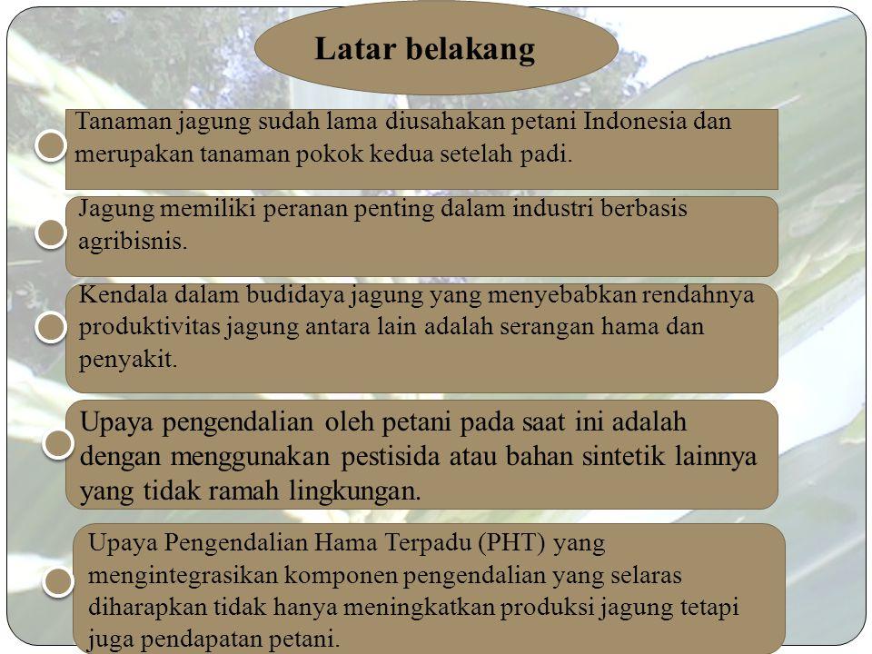 Latar belakang Tanaman jagung sudah lama diusahakan petani Indonesia dan merupakan tanaman pokok kedua setelah padi.