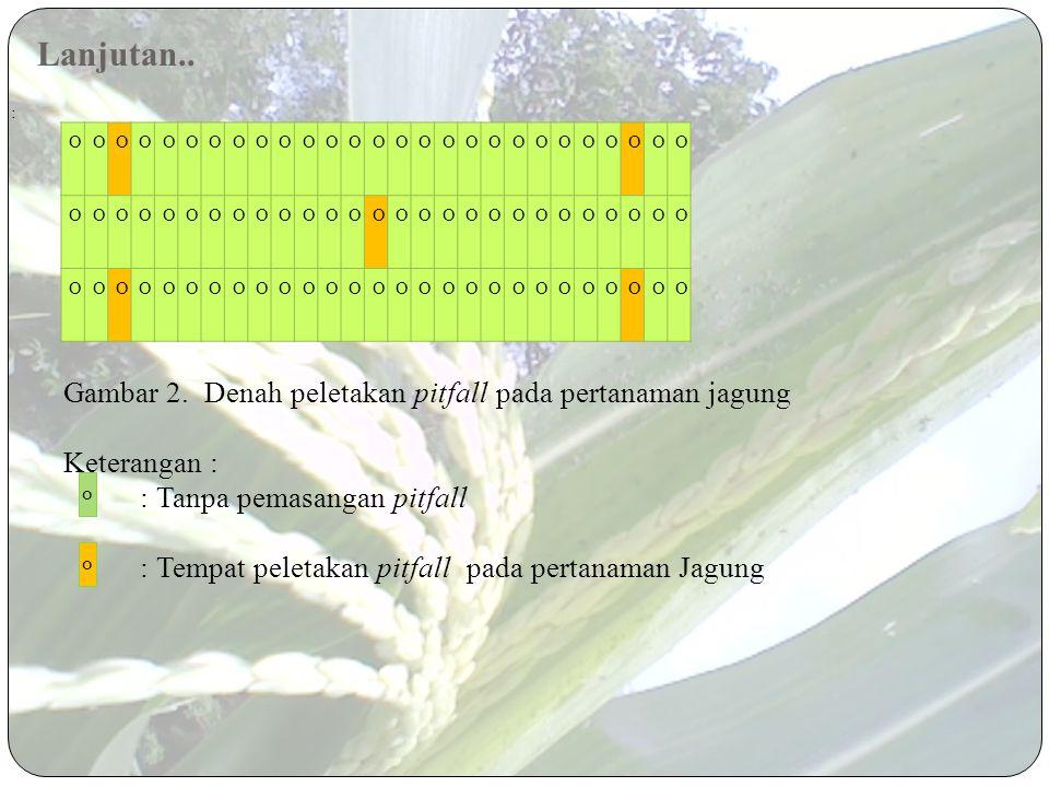 Lanjutan.. Gambar 2. Denah peletakan pitfall pada pertanaman jagung