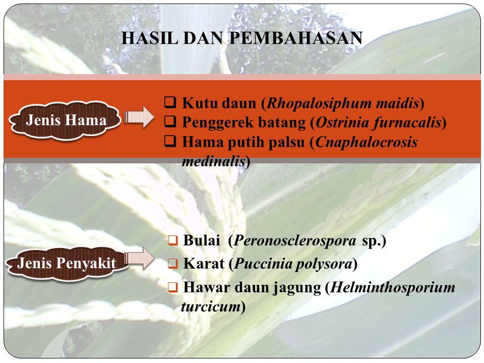 HASIL DAN PEMBAHASAN Kutu daun (Rhopalosiphum maidis)