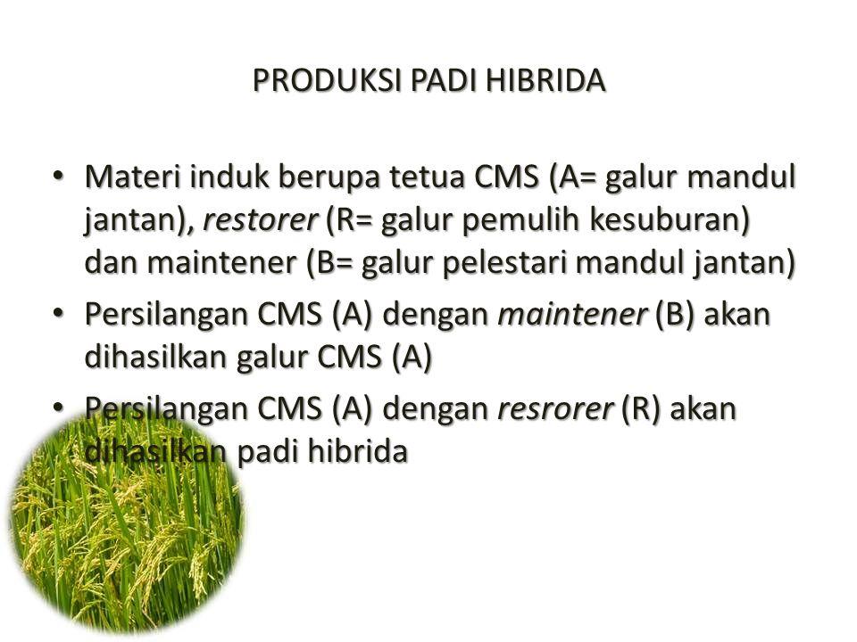 Persilangan CMS (A) dengan maintener (B) akan dihasilkan galur CMS (A)