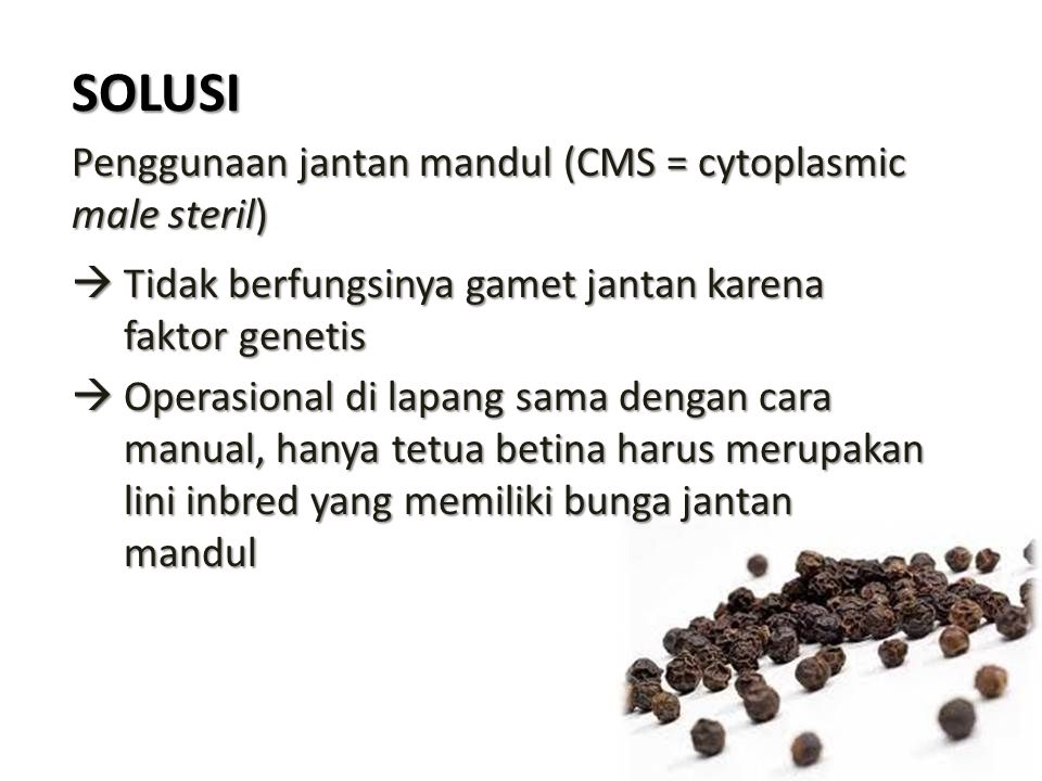SOLUSI Penggunaan jantan mandul (CMS = cytoplasmic male steril)