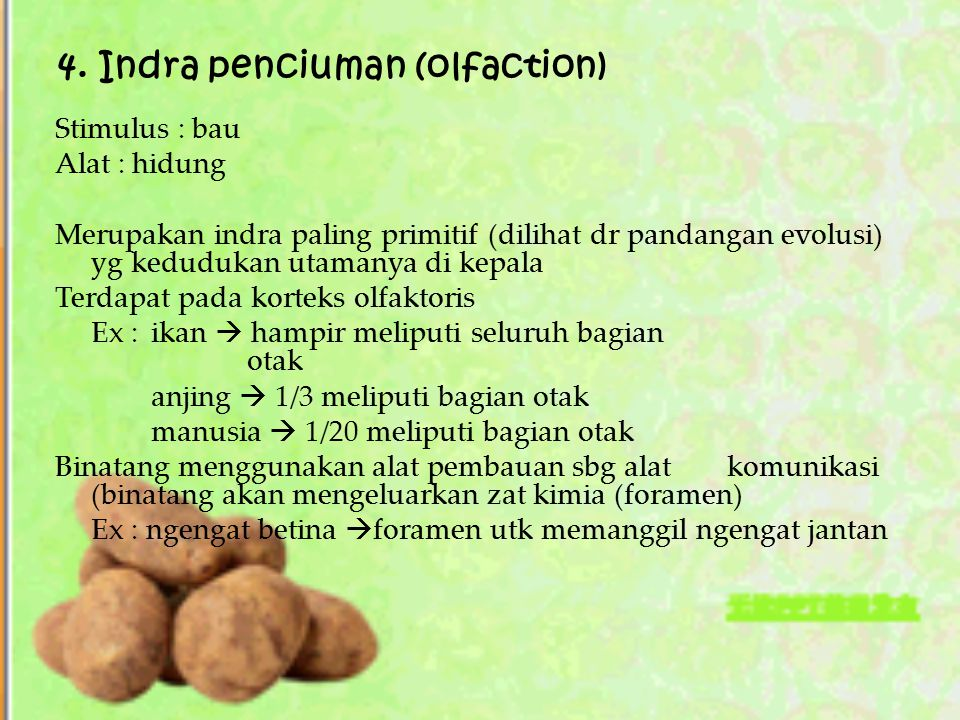 4. Indra penciuman (olfaction)