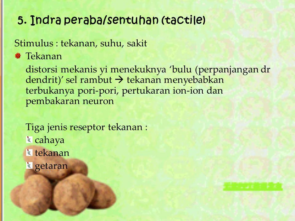 5. Indra peraba/sentuhan (tactile)