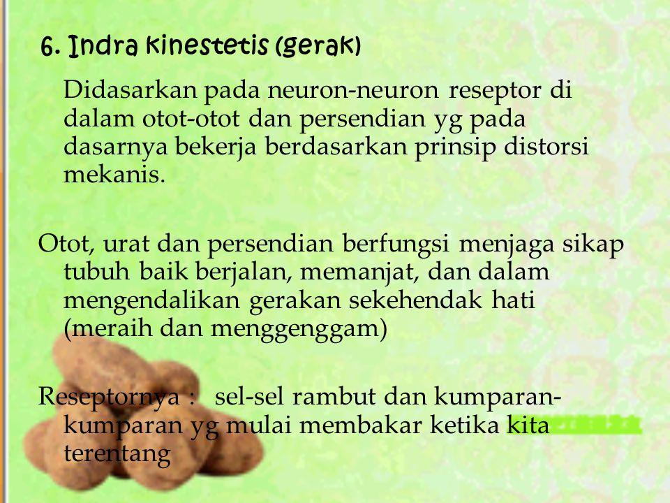 6. Indra kinestetis (gerak)