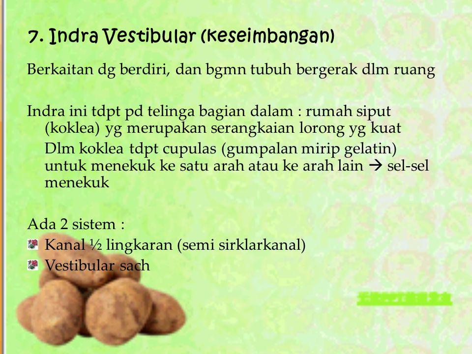 7. Indra Vestibular (keseimbangan)