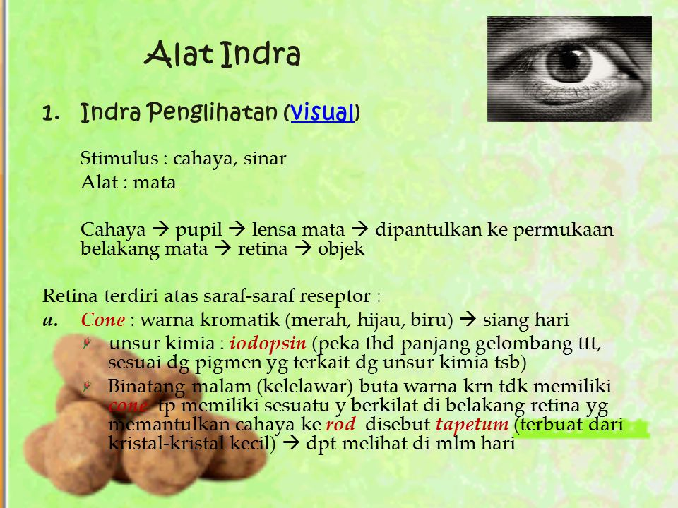 Alat Indra 1. Indra Penglihatan (visual) Stimulus : cahaya, sinar