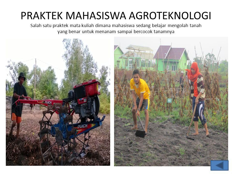 PRAKTEK MAHASISWA AGROTEKNOLOGI Salah satu praktek mata kuliah dimana mahasiswa sedang belajar mengolah tanah yang benar untuk menanam sampai bercocok tanamnya