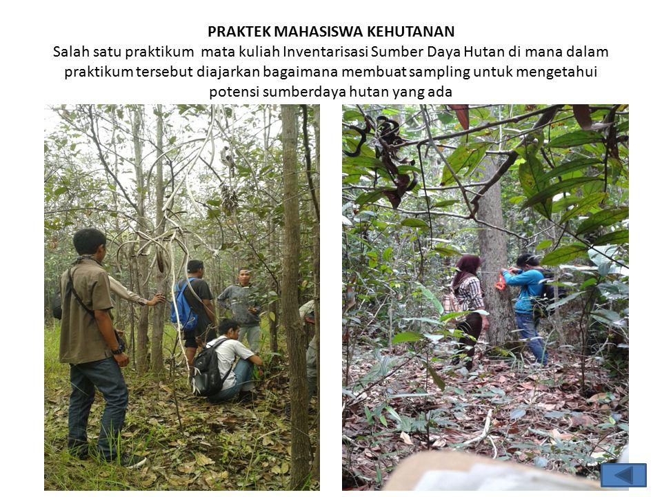 PRAKTEK MAHASISWA KEHUTANAN Salah satu praktikum mata kuliah Inventarisasi Sumber Daya Hutan di mana dalam praktikum tersebut diajarkan bagaimana membuat sampling untuk mengetahui potensi sumberdaya hutan yang ada