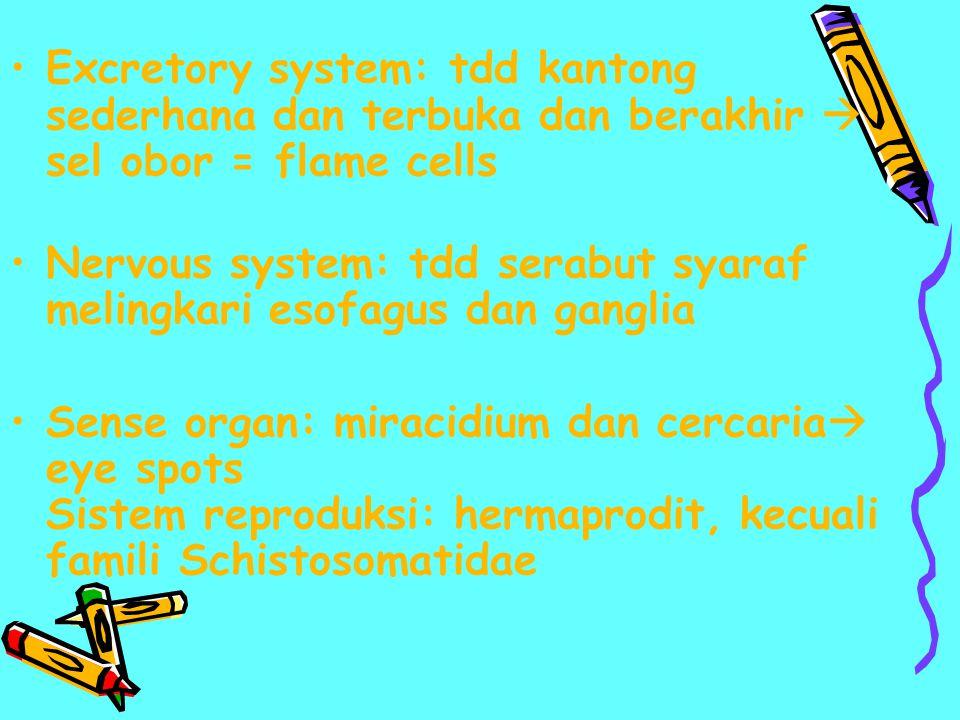 Excretory system: tdd kantong sederhana dan terbuka dan berakhir  sel obor = flame cells