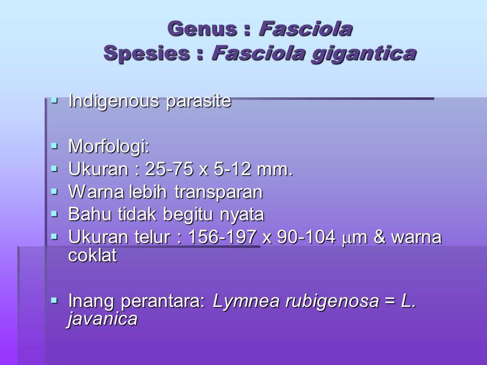 Genus : Fasciola Spesies : Fasciola gigantica