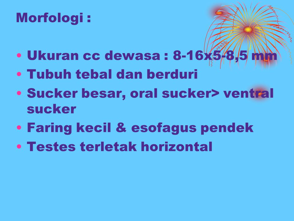 Morfologi : Ukuran cc dewasa : 8-16x5-8,5 mm. Tubuh tebal dan berduri. Sucker besar, oral sucker> ventral sucker.