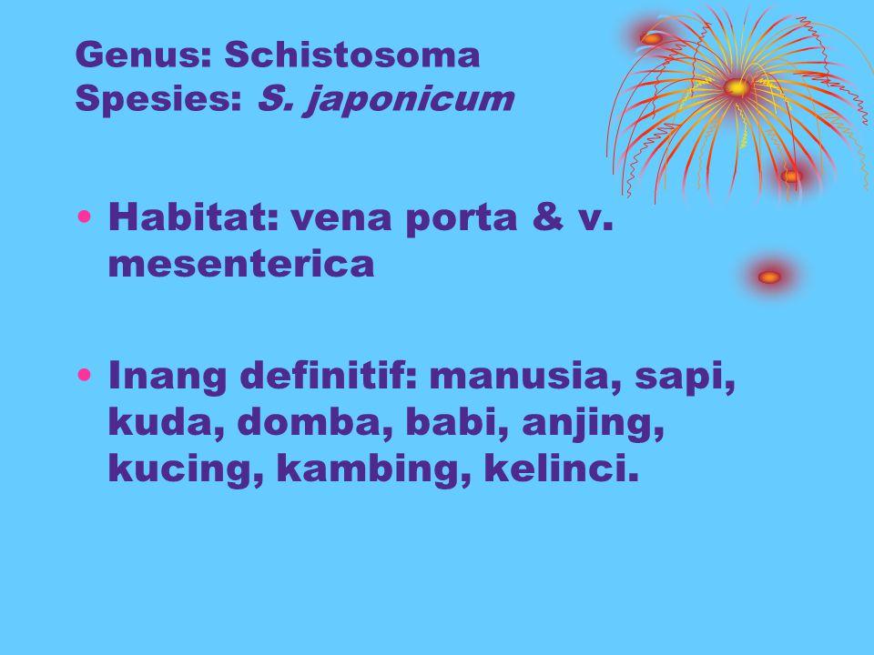 Genus: Schistosoma Spesies: S. japonicum