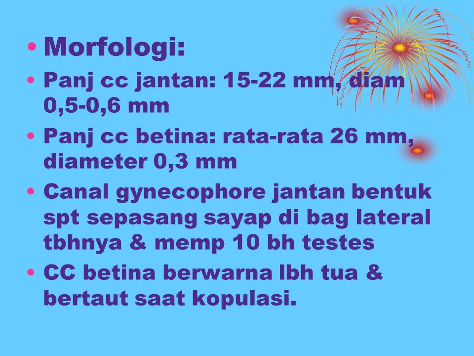 Morfologi: Panj cc jantan: 15-22 mm, diam 0,5-0,6 mm