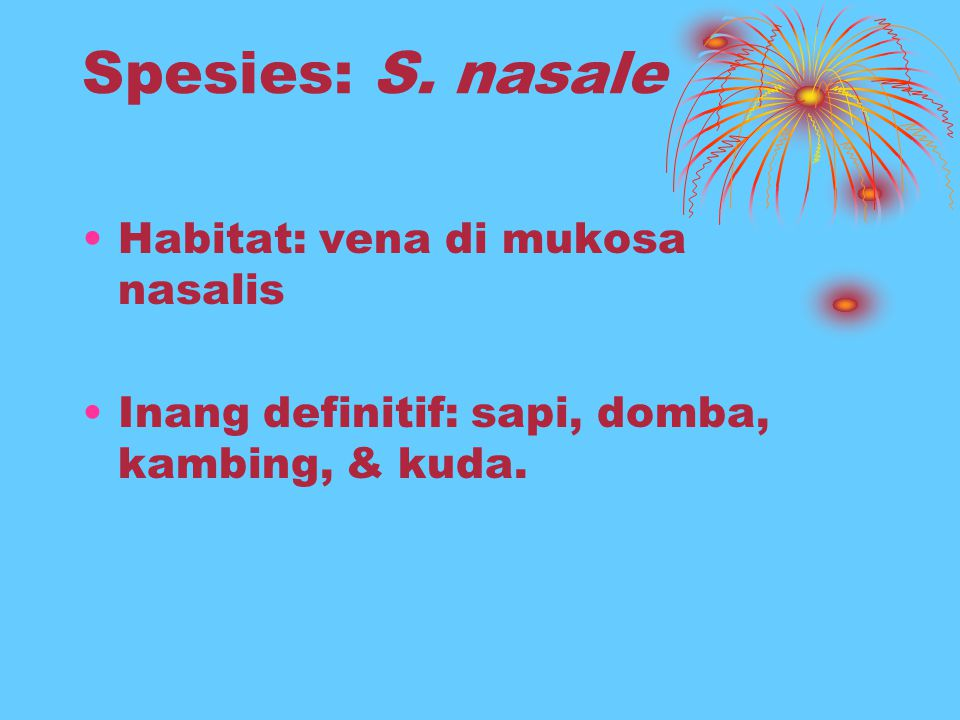 Spesies: S. nasale Habitat: vena di mukosa nasalis