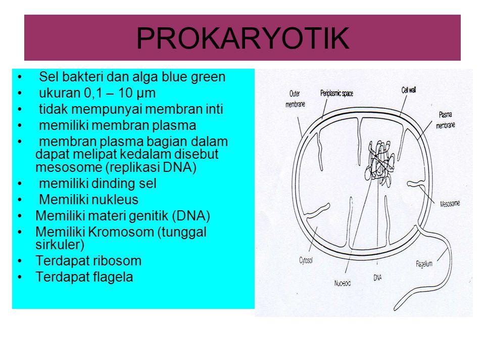 PROKARYOTIK Sel bakteri dan alga blue green ukuran 0,1 – 10 µm