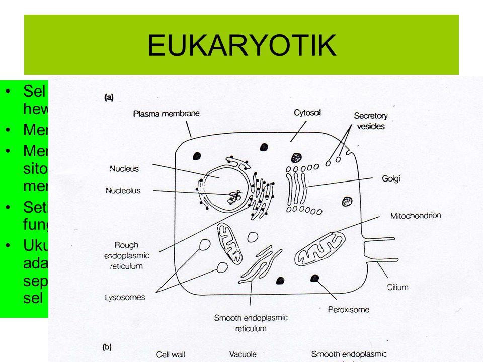 EUKARYOTIK Sel terdapat pada hewan,tumbuhan dan manusia