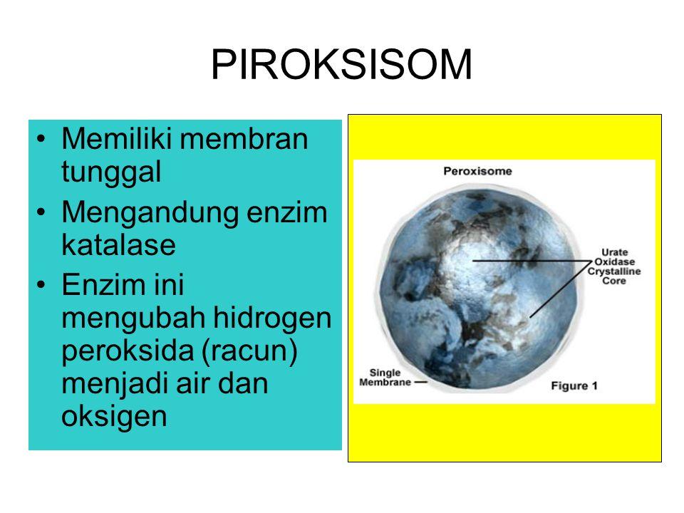 PIROKSISOM Memiliki membran tunggal Mengandung enzim katalase