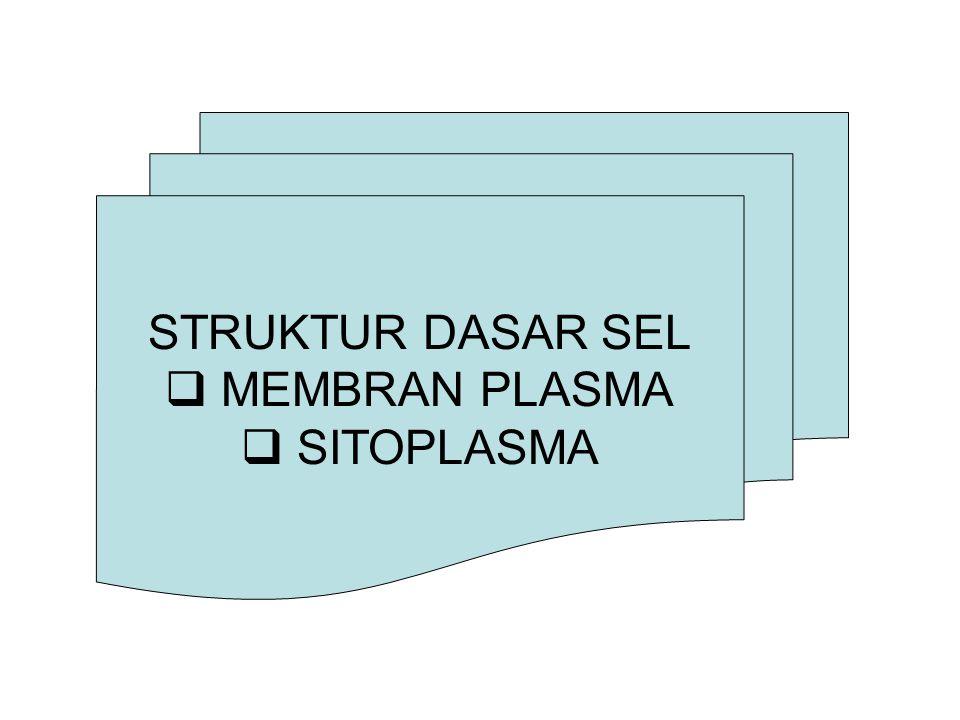 STRUKTUR DASAR SEL MEMBRAN PLASMA SITOPLASMA