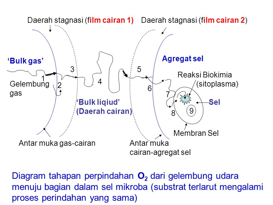 Diagram tahapan perpindahan O2 dari gelembung udara