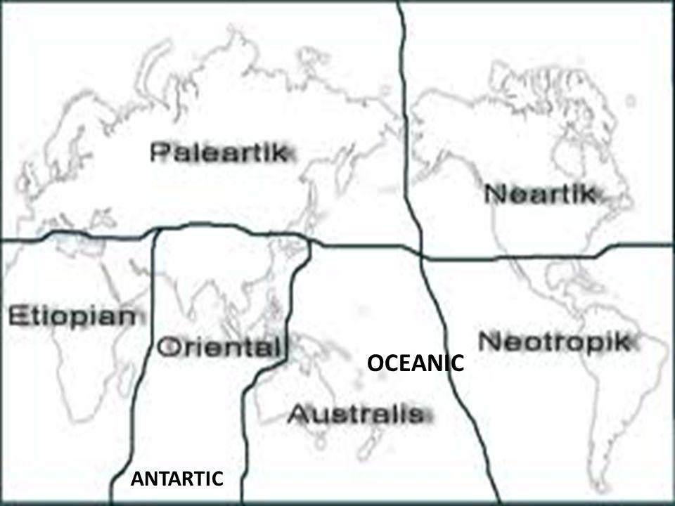OCEANIC ANTARTIC