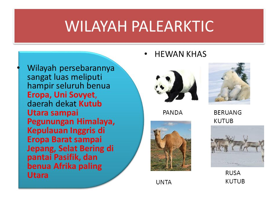 WILAYAH PALEARKTIC HEWAN KHAS
