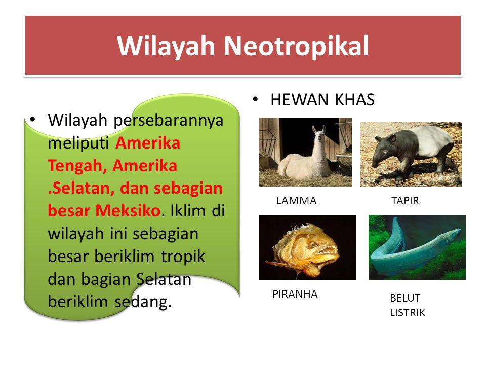 Wilayah Neotropikal HEWAN KHAS