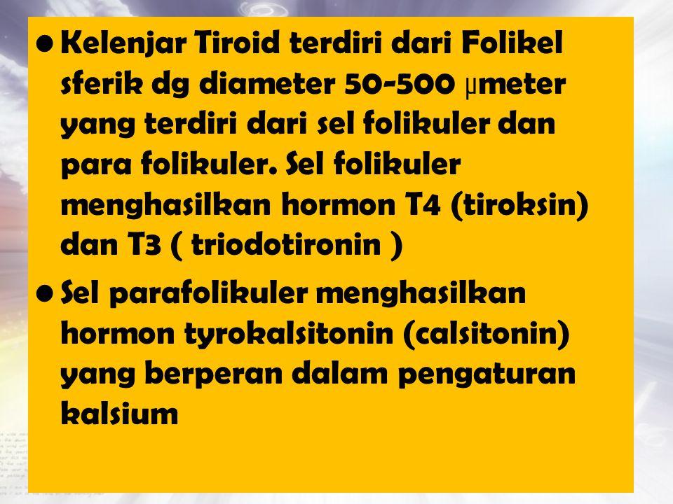 Kelenjar Tiroid terdiri dari Folikel sferik dg diameter 50-500 µmeter yang terdiri dari sel folikuler dan para folikuler. Sel folikuler menghasilkan hormon T4 (tiroksin) dan T3 ( triodotironin )