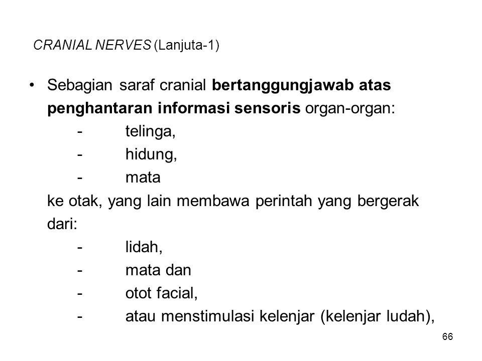 CRANIAL NERVES (Lanjuta-1)