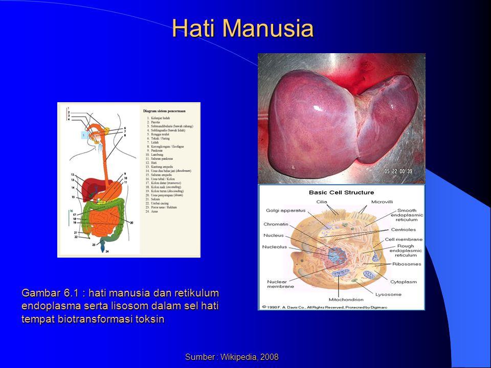 Hati Manusia Gambar 6.1 : hati manusia dan retikulum endoplasma serta lisosom dalam sel hati tempat biotransformasi toksin.