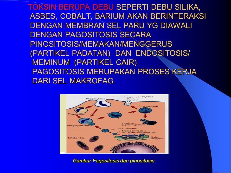 Gambar Fagositosis dan pinositosis