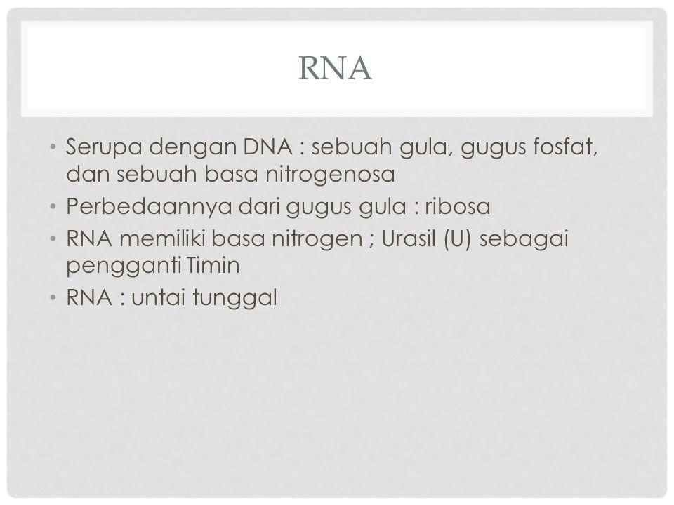 RNA Serupa dengan DNA : sebuah gula, gugus fosfat, dan sebuah basa nitrogenosa. Perbedaannya dari gugus gula : ribosa.