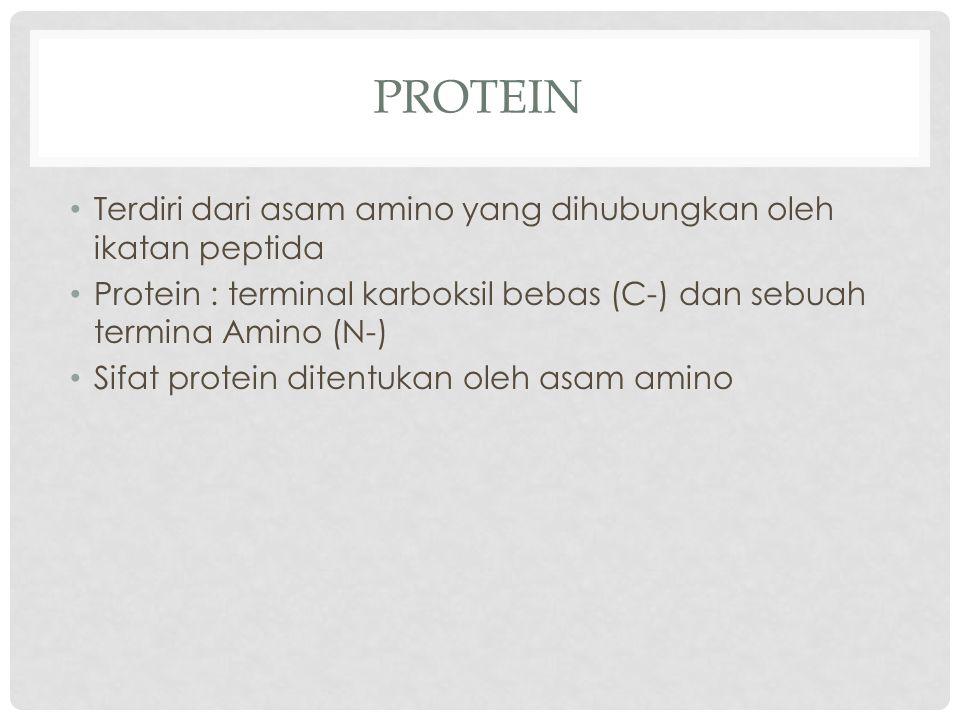 Protein Terdiri dari asam amino yang dihubungkan oleh ikatan peptida