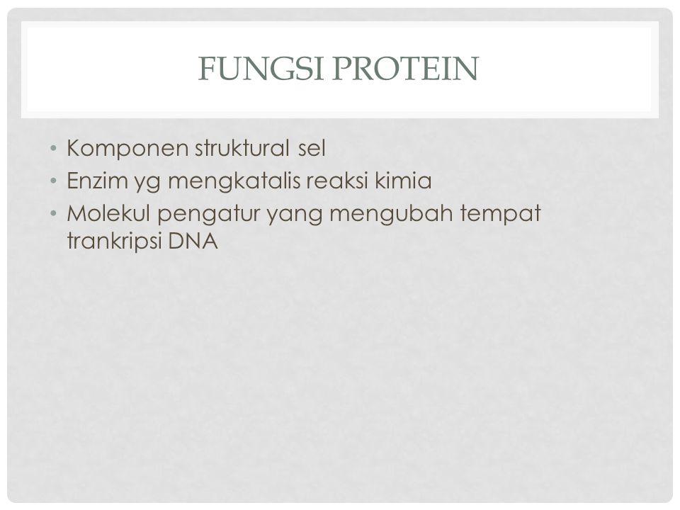 Fungsi Protein Komponen struktural sel