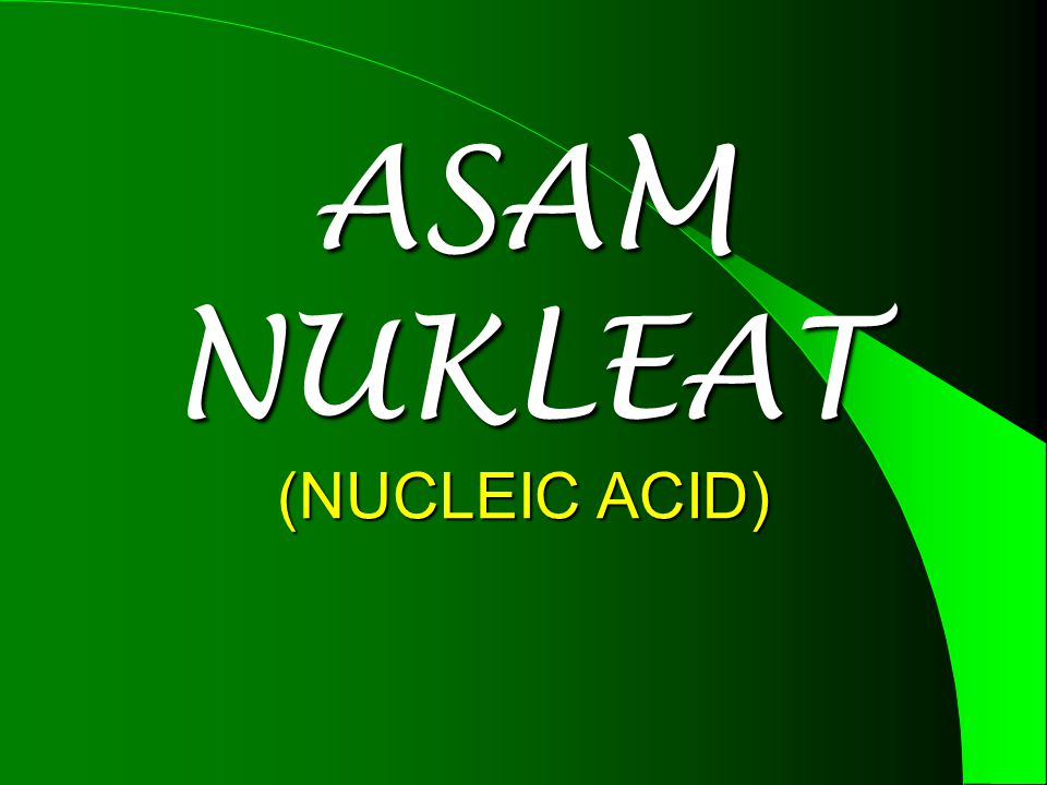 ASAM NUKLEAT (NUCLEIC ACID)