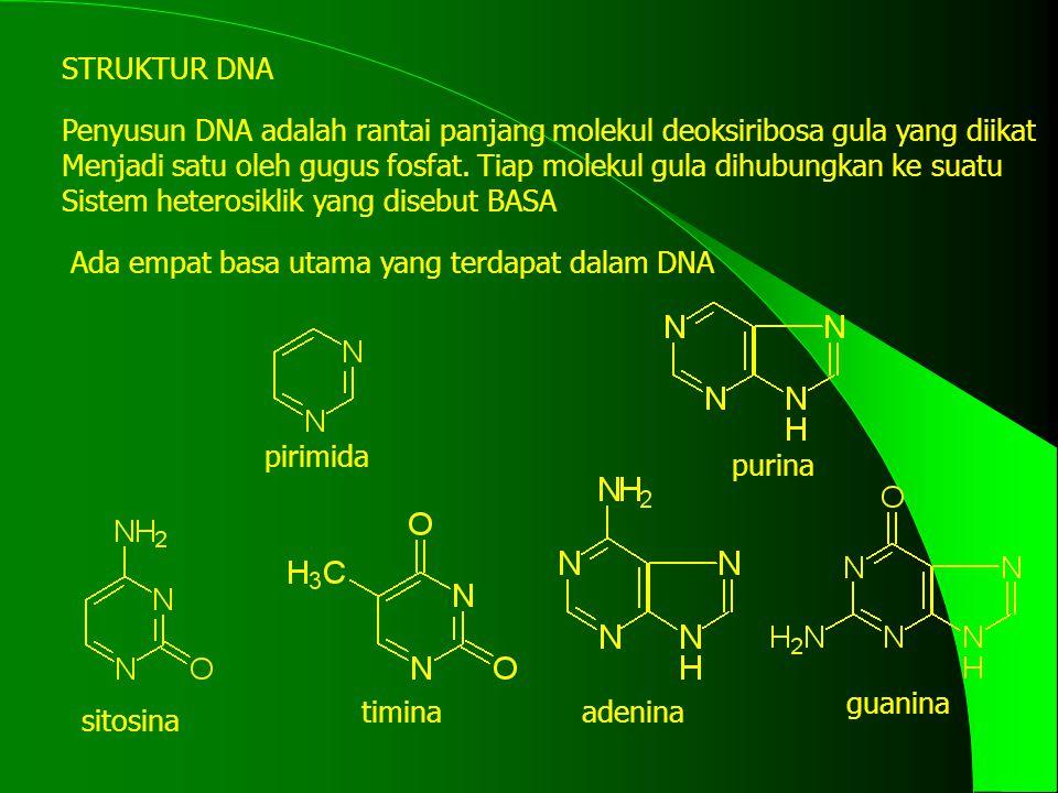 STRUKTUR DNA Penyusun DNA adalah rantai panjang molekul deoksiribosa gula yang diikat.