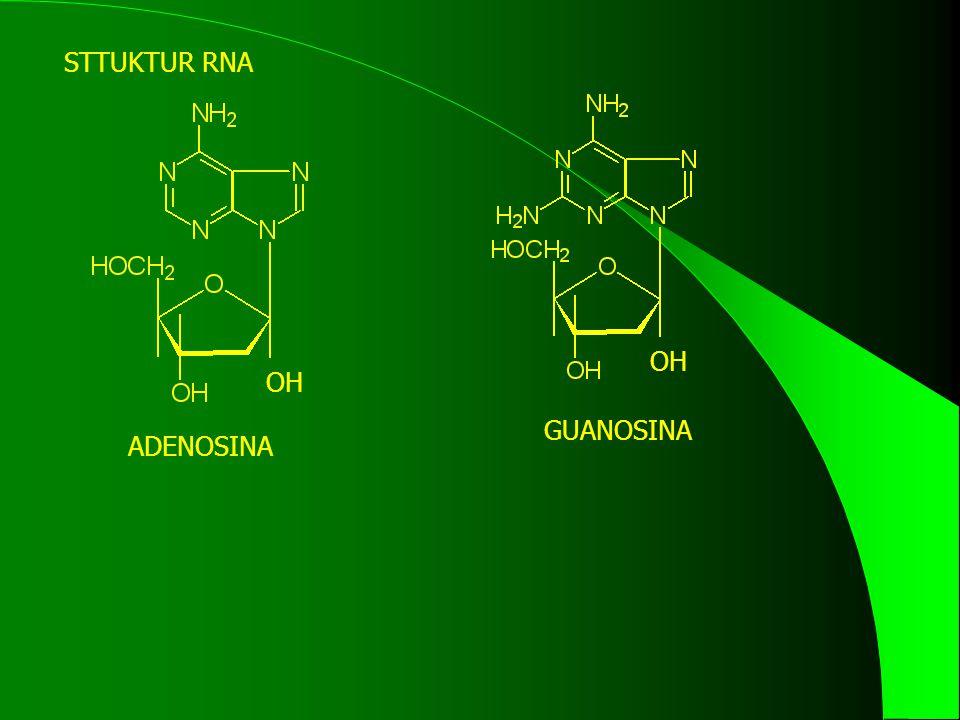 STTUKTUR RNA OH OH GUANOSINA ADENOSINA
