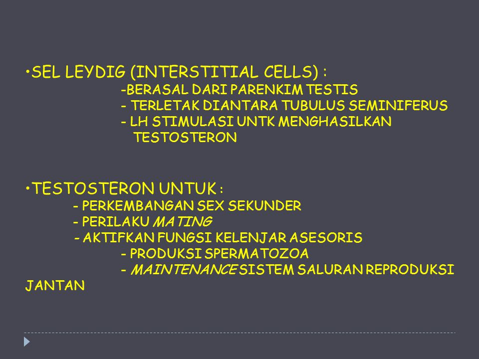 SEL LEYDIG (INTERSTITIAL CELLS) :. -BERASAL DARI PARENKIM TESTIS