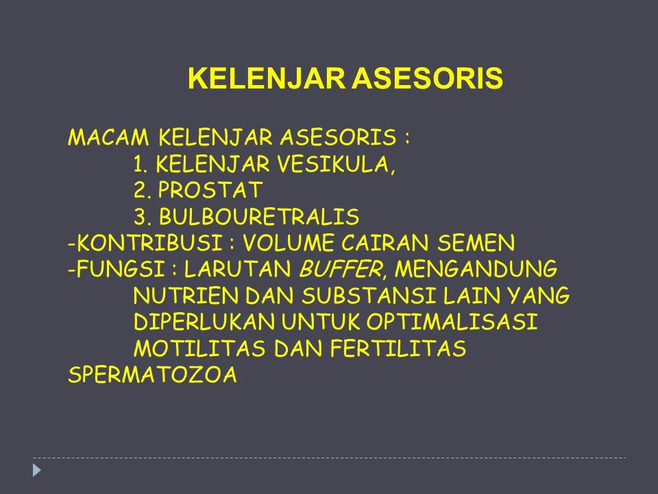 KELENJAR ASESORIS MACAM KELENJAR ASESORIS : 1. KELENJAR VESIKULA,