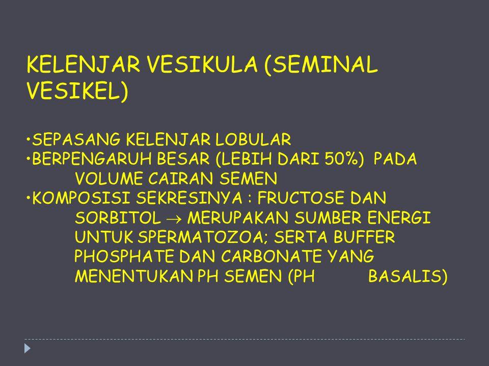 KELENJAR VESIKULA (SEMINAL VESIKEL)