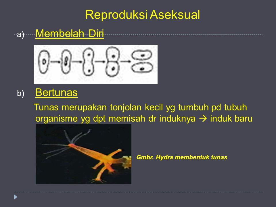 Reproduksi Aseksual Membelah Diri Bertunas