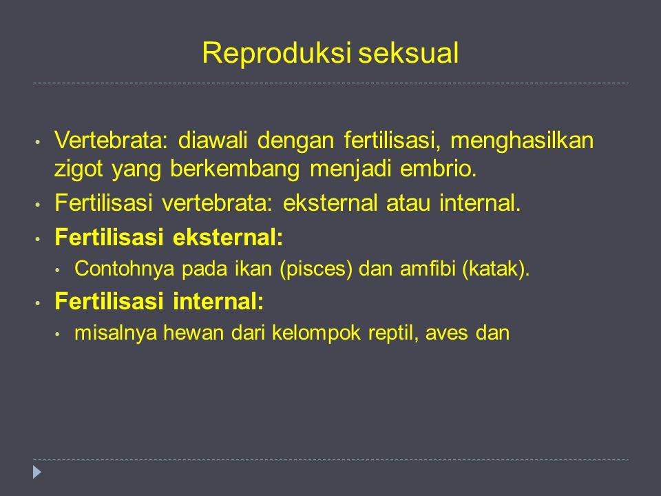 Reproduksi seksual Vertebrata: diawali dengan fertilisasi, menghasilkan zigot yang berkembang menjadi embrio.