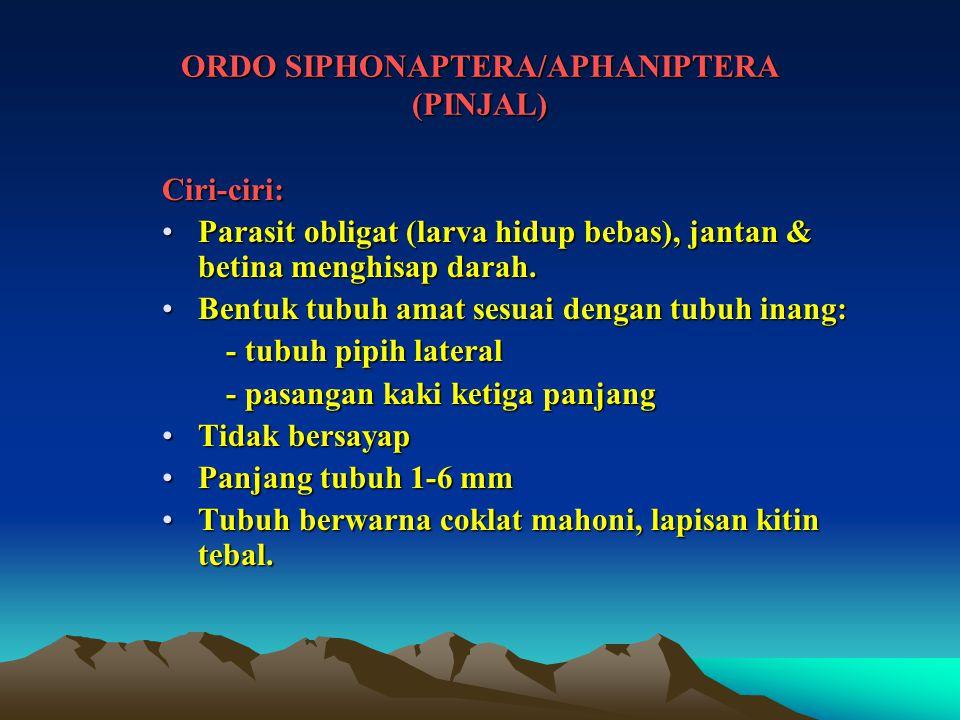 ORDO SIPHONAPTERA/APHANIPTERA (PINJAL)