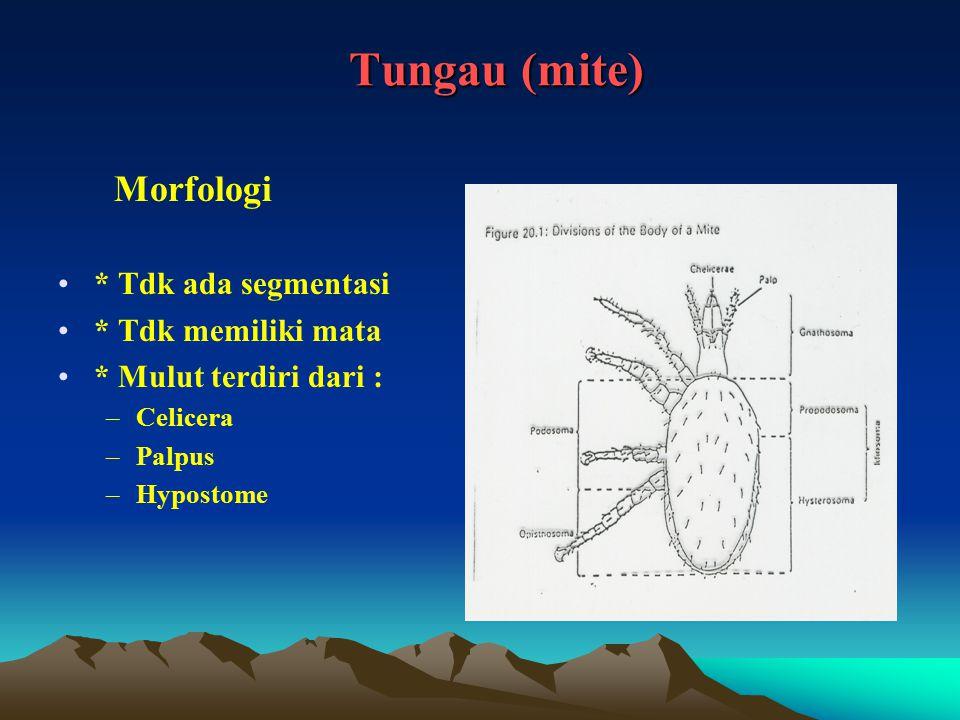 Tungau (mite) Morfologi * Tdk ada segmentasi * Tdk memiliki mata