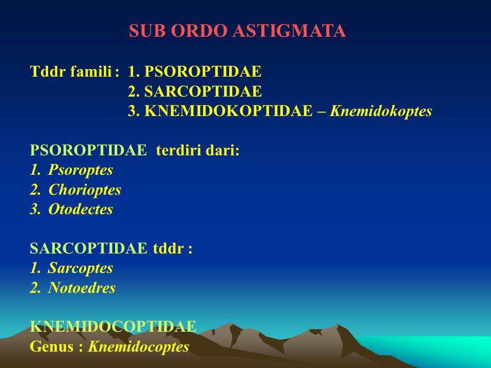 SUB ORDO ASTIGMATA Tddr famili : 1. PSOROPTIDAE. 2. SARCOPTIDAE. 3. KNEMIDOKOPTIDAE – Knemidokoptes.